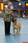20130511-BMCN-Bullmastiff-Championship-Clubmatch-1651.jpg