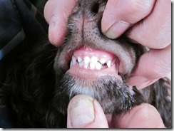teeth 005 (1024x768)