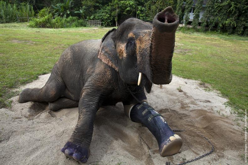 elephant-hospital-12