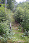 Schody do nieba w środku lasu, obok był też zjazd.