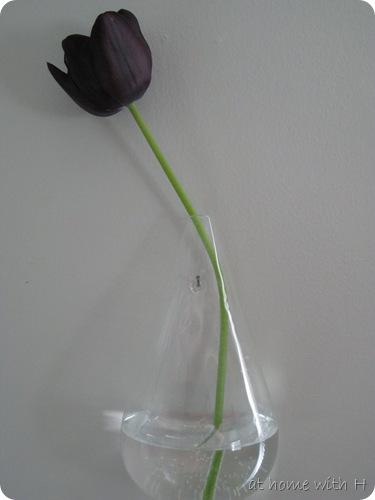 tulip_kitchen_athomewithh