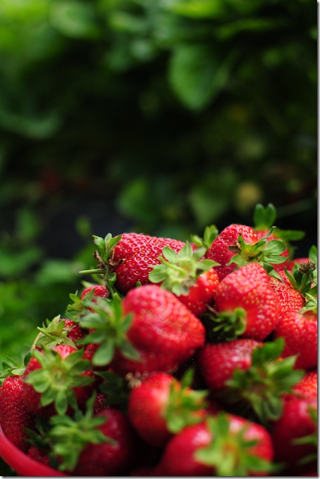 Strawberry Picking & Marcus band 046