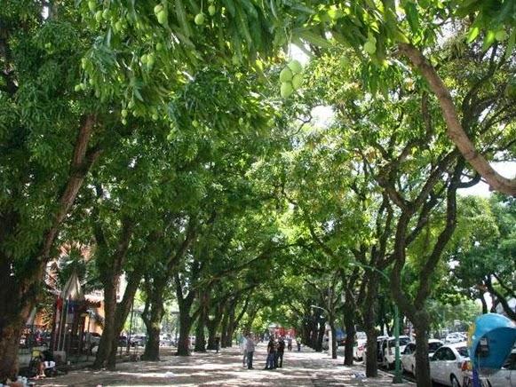 Manghi lungo le strade di Belém do Parà