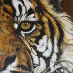 danielle BECK. Tigre de Sumatra. Huile.