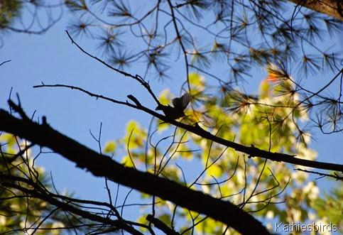 7. warbler-kab