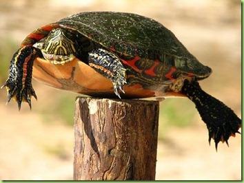 Turtle1MA31593821-0022