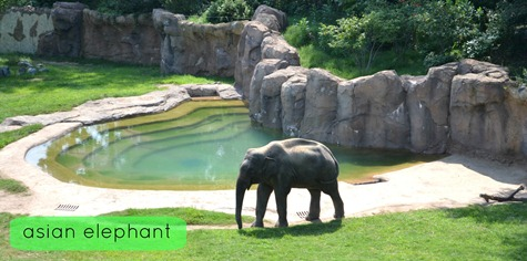 NationalZoo_2