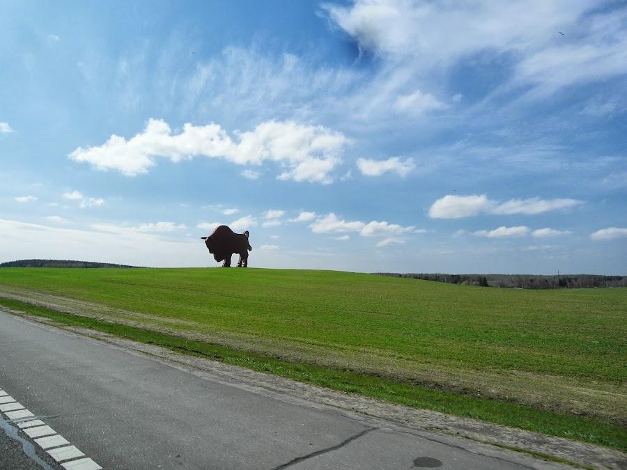 Зубр на белорусской дороге