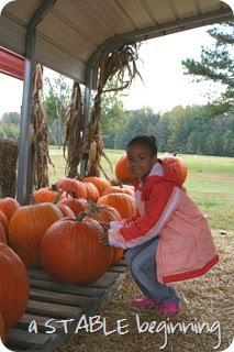 Pumpkins 014