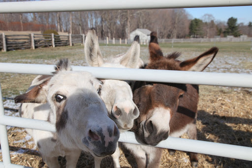 Just look at them clamoring to get a peek.  Relax, donks!  It's not like Black Beauty is passing by!