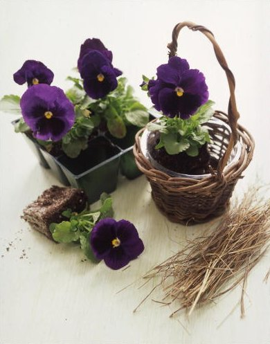 A row of these small baskets would look great on a windowsill. (Martha Stewart Living)