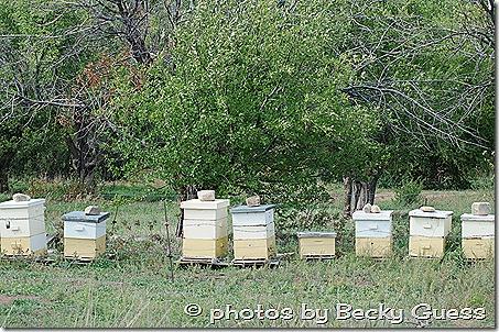 10-05-11 raspberry farm near Mora NM 09