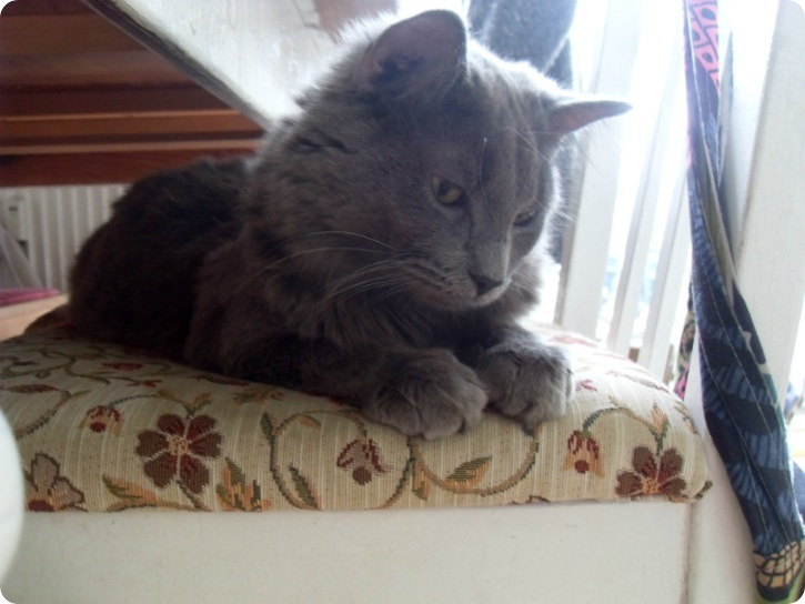 Katte - juni 2013