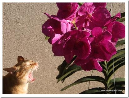 cat_elbi_orchids
