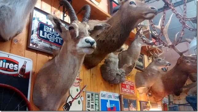 Taxidermy in Wallace ID