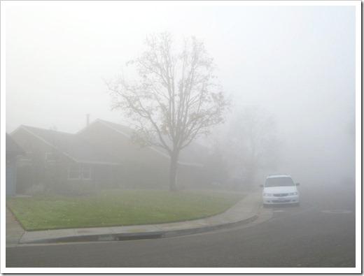 121211_fog_34