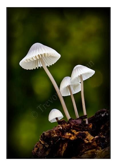 Mini Fungi 6