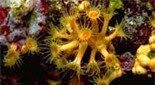 Méditerranée grotte à corail rouge anémone encroûtante