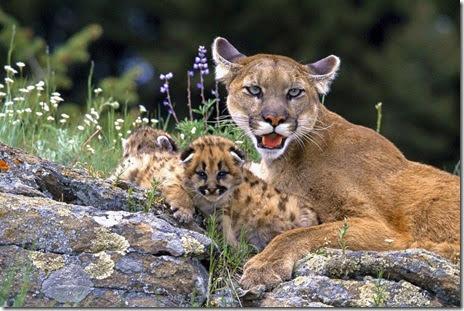 funny-animals-cute-049