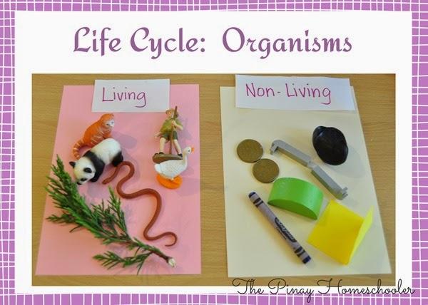 organism copy