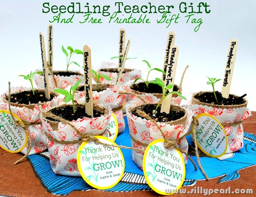 Seedling  Teacher Gift and Free Printable Gift Tag by The Silly Pearl