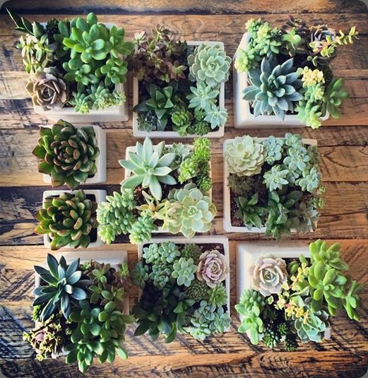 succulents 1477339_356750731136212_452348051_n floral crush studio