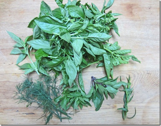 Three types of basil, dill and tarragon