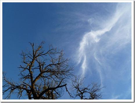 111231_tree_silhouette_10