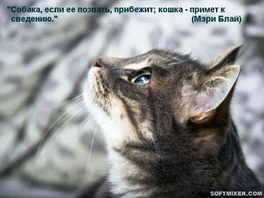 b_mainimg1321280466