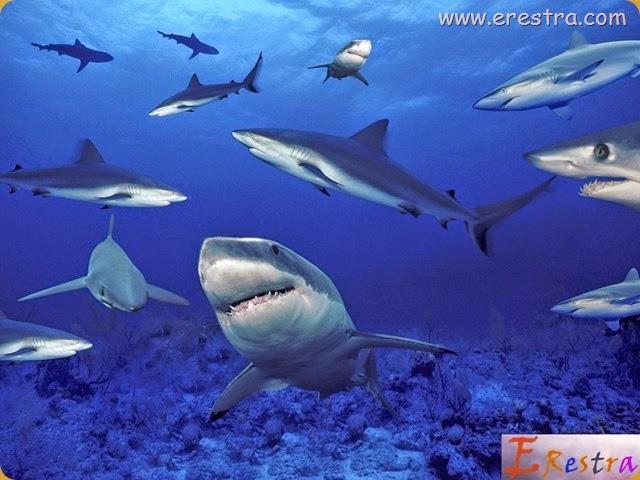Underwater Wallpaper (133)