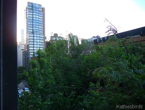 3. trees n buildings-kab