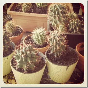 repotting-cactus-kitchen-tongs