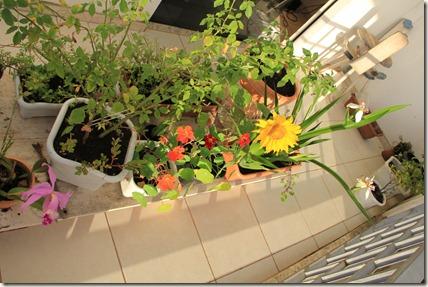 Jardim 23-11-2011 003