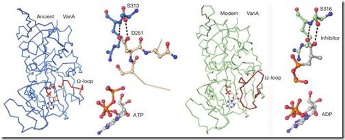 vancomicina-resistencia