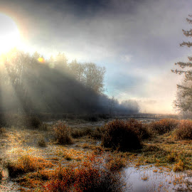 Across The Way by Ernie Kasper - Landscapes Weather ( clouds, water, marshland, park, canada, fog, ray of light, langley, forest, sunlight, british columbia )