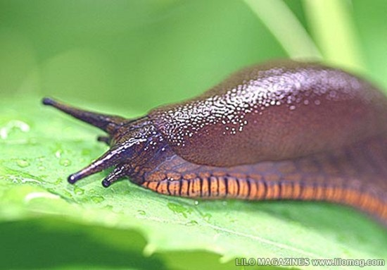 Slug 01