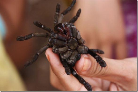 spider-food-cambodia-8