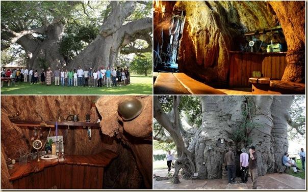 sunland-baobab[3]