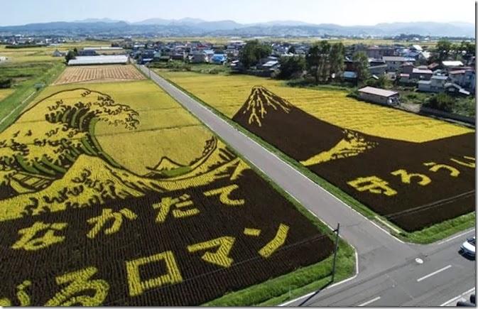 rice-art05_1