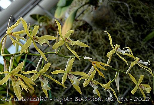 Glória Ishizaka -   Kyoto Botanical Garden 2012 - 27