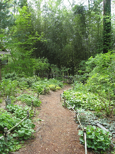 A path through the Asian woods.