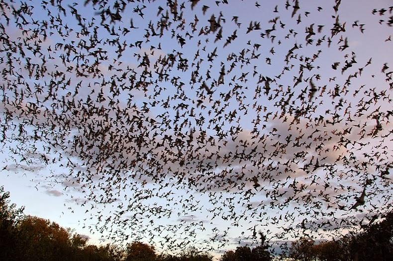 bracken-bat-cave-4