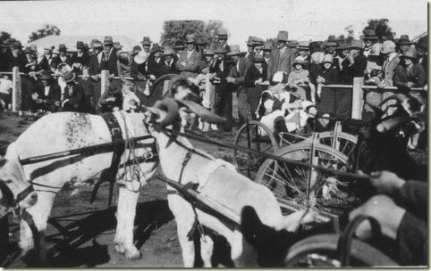 goat racing aust