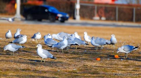 2. calm gulls-kab