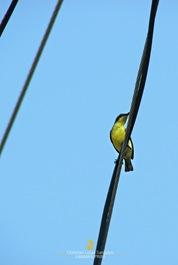 The Birds of Banton Island