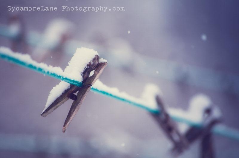 SycamoreLane Photography-105