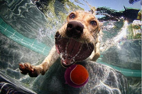 Underwater Dog  07