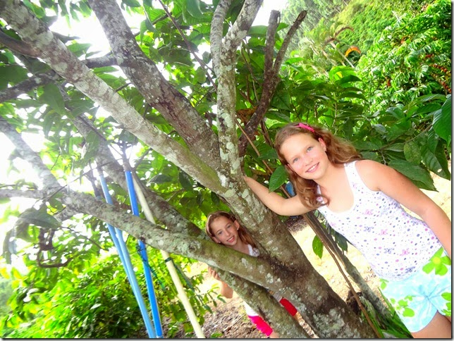 Árvore do biribá