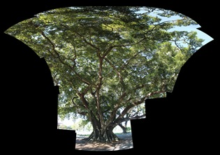 Autostitch panorama