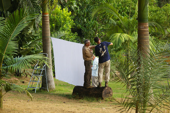 Préparation de la collecte nocturne. Jardin de palmiers près de la Rivière Comté. 23 novembre 2011. Photo : J.-M. Gayman